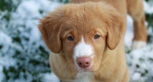 Cachorros o el regalo más importante que puedes hacer