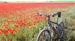 Bicicleta y primavera, binomio perfecto