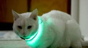 El collar led para mascotas