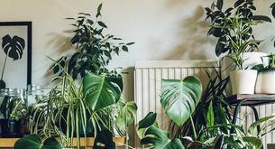 Las mejores plantas de interior para darle vida a tu casa este invierno